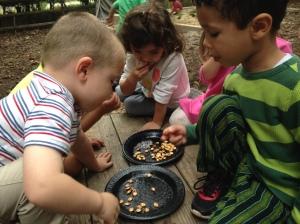 Taste testing pumpkin seeds