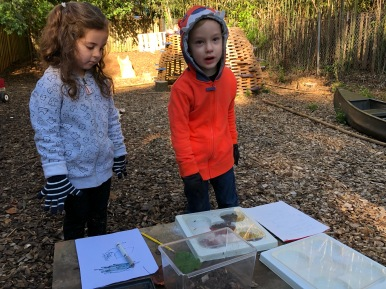Making a hypothesis about pillbug habitat preference