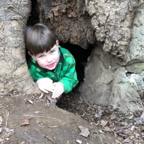 Tree-caver