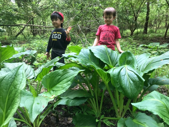 """Look how big the skunk cabbage got!!"""